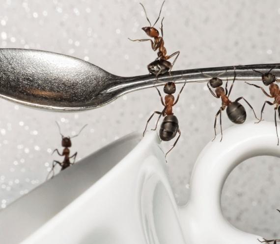 formigas repelente