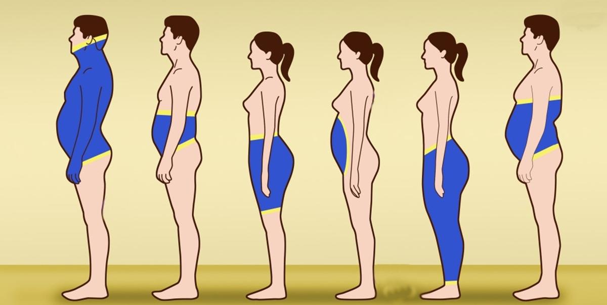 gordura branca